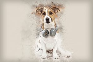 Dog portrait with headphones
