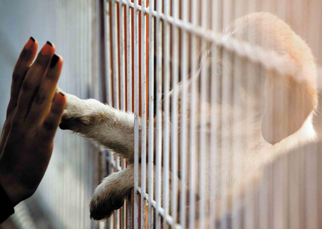 adopting a new pet