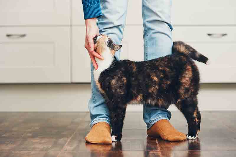 Cat health and wellness is important as a pet owner.