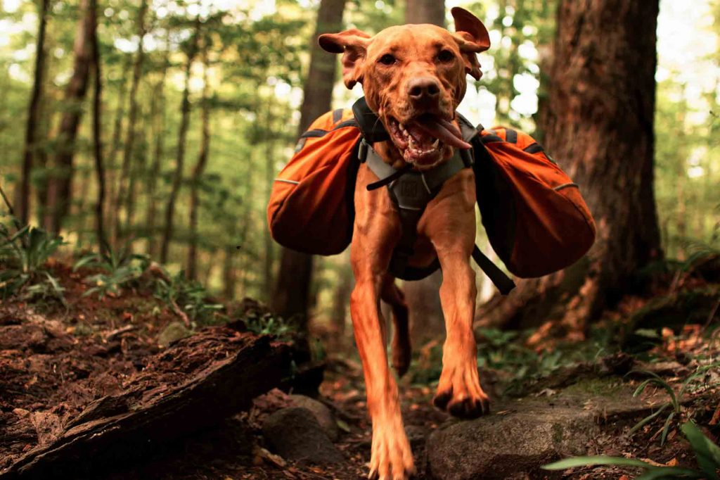 Enjoying outdoor activities with your dog is a great way to combat pet obesity and to help your pet exercise