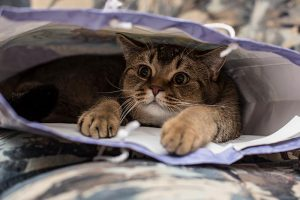 Cat behavior can often be strange and is sometimes linked to cat health
