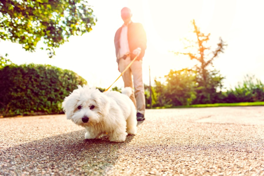 The benefits of walking your dog can impact dog health and wellness