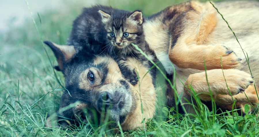 Kitten and dog laying on grass