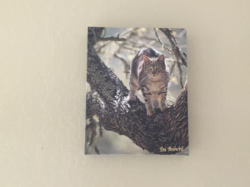 Frame of cat in a tree